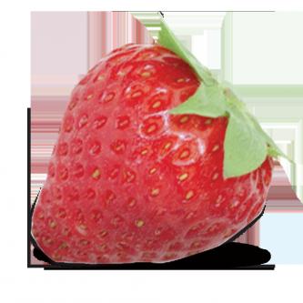 """<p class=""""nom"""">La Charlotte</p><p class=""""description"""">Sa forme n'est pas sans rappeler celle d'un cœur et sa chair fondante renferme un puissant parfum de fraise des bois. Elle est très peu acide.</p>"""