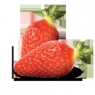 """<p class=""""nom"""">La Gariguette</p><p class=""""description"""">C'est la reine des fraises, l'une des plus plébiscitée. Elle se reconnait à sa forme très fine et allongée et à ses arômes très prononcés. A noter qu'elle est très acidulée, avis aux amateurs!</p>"""