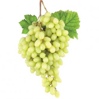 """<p class=""""nom"""">Italia</p><p class=""""description"""">Gros grains jaunes, juteux et croquants. Très bon goût</p><p class=""""disponibilite"""">septembre à octobre</p>"""