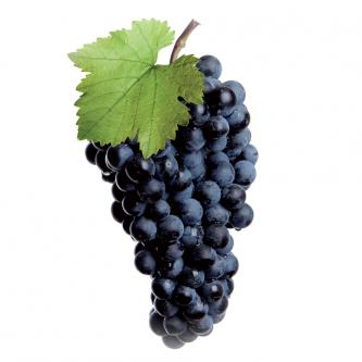 """<p class=""""nom"""">Alphonse Lavallée</p><p class=""""description"""">Grandes grappes, à gros fruits bien ronds, à la peau épaisse et à la pulpe charnue. Senteurs d'écorce et de caramel. Bon équilibre sucre acidité.</p><p class=""""disponibilite"""">août à octobre</p>"""