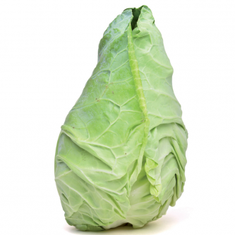 """<p class=""""nom"""">Chou pointu</p><p class=""""description"""">Il se reconnait à ses feuilles s'enroulant en cornet pour former une pomme conique. Ses feuilles tendres et très digestes sont délicieuses en salade. Cuit, on peut s'en servir dans de nombreuses recettes en remplacement du chou lisse.</p><p class=""""disponibilite"""">avril à juillet puis octobre à janvier.</p>"""