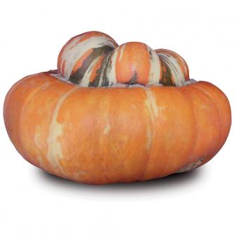 """<p class=""""nom"""">Bonnet Turc</p><p class=""""description"""">2kg environ. Saveur : sucrée et ferme. Cuisine : purée/potage, four.</p><p class=""""disponibilite"""">juillet à octobre</p>"""