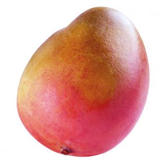 """<p class=""""nom"""">La mangue Kent</p><p class=""""description"""">Leur caractéristique : Très ressemblantes, ces deux variétés se distinguent par une chair sans fibres, juteuse et très sucrée.</p>"""
