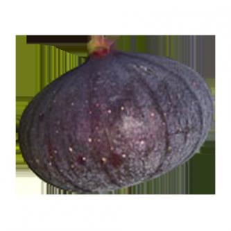 """<p class=""""nom"""">La Bourjassote / Violette / De Solliès</p><p class=""""description"""">Cette figue charnue, aux nombreuses graines fines possède une chair sucrée, juteuse et parfumée.  La figue violette de Solliès (AOP) est sans doute la plus connue. Cultivée dans le sud du Var, elle représente 75% de la production Française. Résultat de critères naturels spécifiques et de savoir-faire anciens, la figue de solliès est reconnue au niveau européen.</p>"""