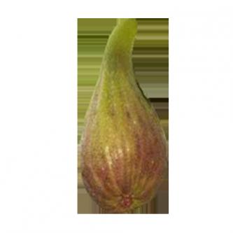 """<p class=""""nom"""">La longue d'Août / La Banane</p><p class=""""description"""">Juteuse, sucrée et parfumée, elle est excellente en confiture.</p>"""