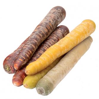 """<p class=""""nom"""">Carottes blanches jaunes et violettes</p><p class=""""description"""">Aspect : colorées par des pigments naturels. La carotte orange étant issue de la sélection des paysans. Goût : blanche neutre. Jaune et violette sucrées. Utilisation : crue râpée, cuite à la vapeur pour ne pas altérer sa couleur</p><p class=""""disponibilite"""">septembre à janvier</p>"""