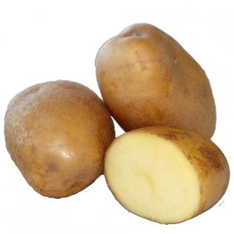 """<p class=""""nom"""">Agria</p><p class=""""description"""">Pomme de terre à chair fondante. Idéale pour les frites</p><p class=""""specificite"""">frites, rissolées, sautées, gratin, ragout, four, purée</p>"""